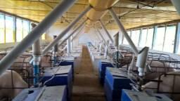 Granja Integrada com BRF - 700 Matrizes em Ciclo de Produção - Creche em Anexo