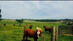 Área rural na ers 265