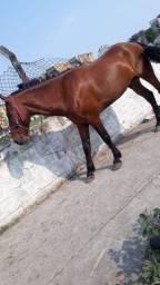 Cavalo e charrete