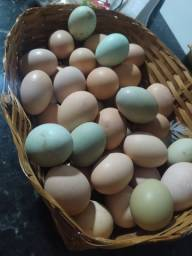 Vende-se Ovos Caipiras