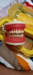 Manequim dentistica pronew