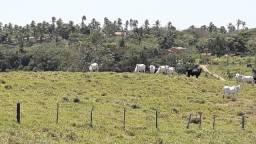 Vendo 5 vacas Nelore. Geração 2013