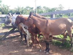 Vendo 1 burro e 4 cavalos