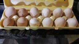 Vendo ovos