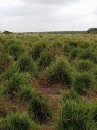 Fazenda com 1.100 hectares na região do Município de Primavera-Pa.