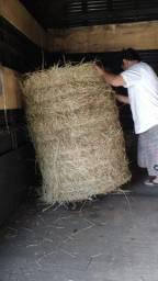 Feno de alta qualidade 130 quilos fazemos entrega
