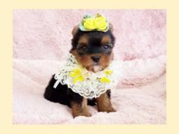 *Filhote de yorkshire fêmea, fofíssima!! No Namu Royal Pet shop*