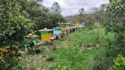 Procuro área para instalação de apiario em Piraí do Sul