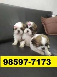 Cães Filhotes Criação Profissional BH Shihtzu Poodle Beagle Lhasa Maltês Yorkshire Basset