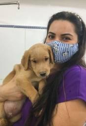Babá de Pet / Pet Sitter / DogWalk / Cuidadora de animais