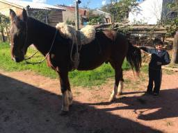 Cavalo para crianças desfilar