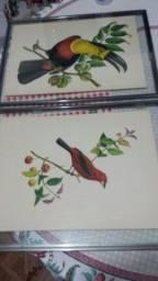 Gravuras antigas J. Th Descourtilz para decoração ou colecionadores