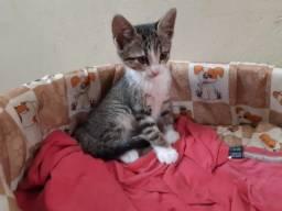 Gato c/ 3 meses, super carinhoso - disponível para adoção