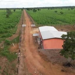 Fazenda em Dorilândia - TO