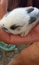 Vendo filhotes de coelhos