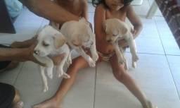 Doações de cachorros