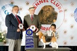 Canil MAPA GRANDE SERYGY- beagle