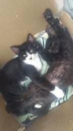 Duas filhotes de gatinhas para doar