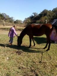Cavalo marga larga com criolo $$1500