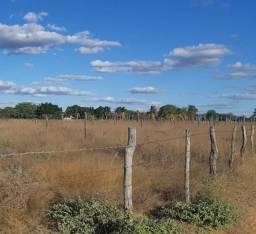 Lotes para chácara com sistema de irrigação instalado a partir de R$ 25.000,00