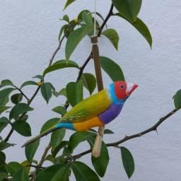 Pássaro de Madeira Diamante de Gould