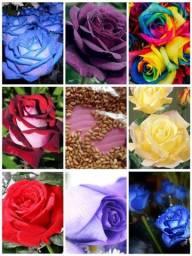 50 Sementes De Rosas Raras Mix