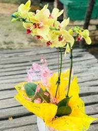 Dia dos avós orquídeas