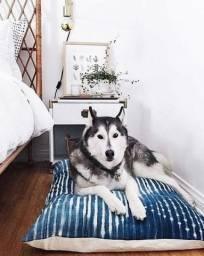 Suítes de luxo para cães e gatos