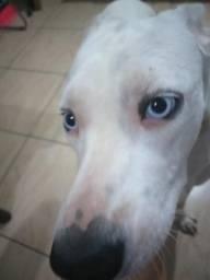 Nina linda de olhos azuis