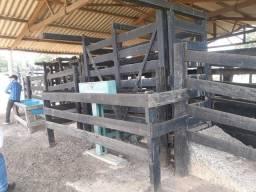 Ótima fazenda para engordar de boi aceita 50% imóveis