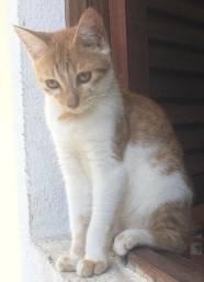 lindos gatinhos para adoçao
