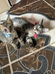 2 filhotes de gatinhos