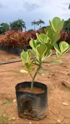 Plantas variadas e diversos tamanhos