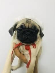 Pug !!!
