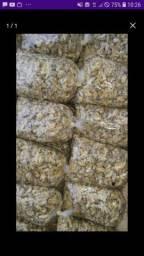 Mexilhao (só $19 o kg)