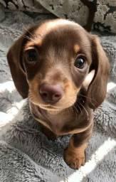 Quero adotar um cachorrinho