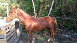 Cavalo ensilhado
