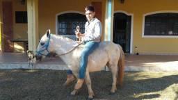 Poney Muito Manso
