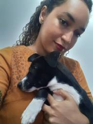 doação de cadela