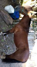 Troco cavalo chucho não foi mechido