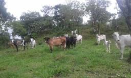 Fazenda 28 Alqueires Municipio Cocalzinho
