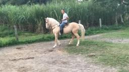 Oferta Cavalo de Marcha Picada 12 mil