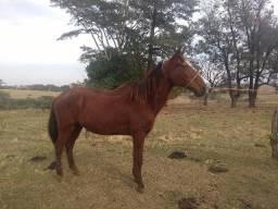 Cavalo + Carroça (Completa)