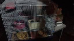 Gaiola de 3 andares + casal de hamster sírio