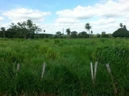 Vendo várias fazendas no estado Ms
