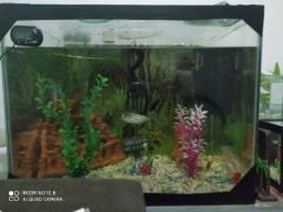 Troco aquário de 60 L por aquário de 120 L