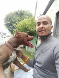 Dog Pitbull