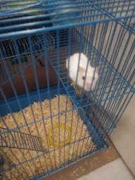 Hamster anão russo (30 dias)