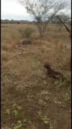 Cachorro de perdiz e codorna