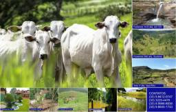 Adquira Já Seu Imovel Rural